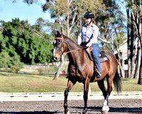 Dressage Introductory